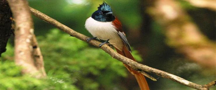 Nepal wildlife reserves